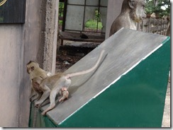 Monkeys 15 July 2012 010