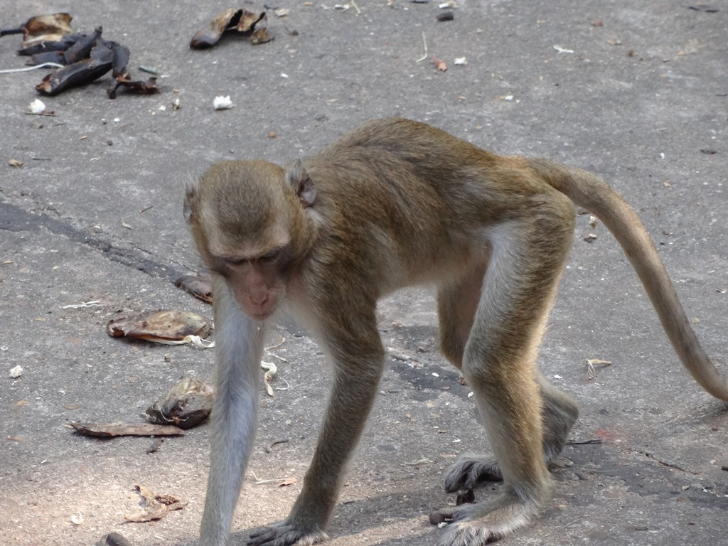 Monkeys Mating Like Humans