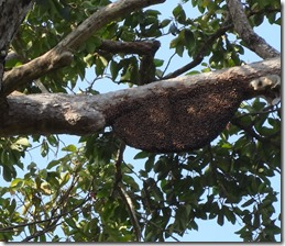 bee hive hanging