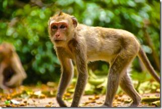 monkey alert