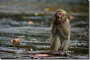 monkey in rain