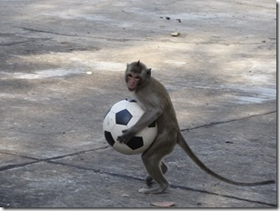 monkey standing holding ball