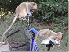monkeys on blue bike