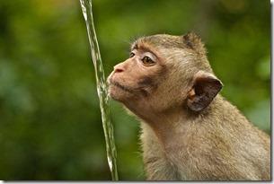 monkey & running water