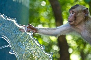 monkey water CL