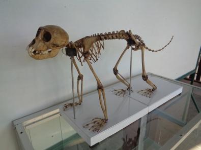 standing skeleton.JPG